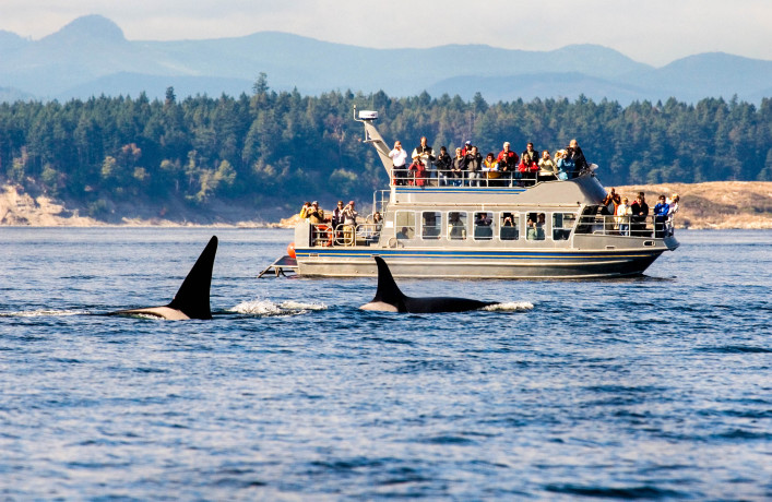 Whale Watching tipps