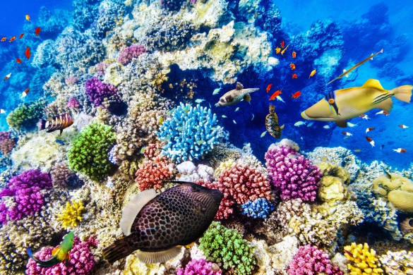 wonderful-and-beautiful-underwater-world-with-corals-and-tropical-fish-shutterstock_261953732-2-585x390-1