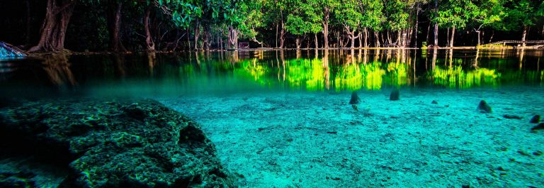 Emerald Pool in Krabi Thailand