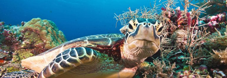 Green-turtle-stare-down-iStock_000027877518_Large