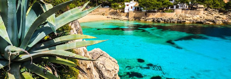 Agave palnt beach bay azure turquoise sea water hill pine tree, Cala Gat, Majorca island, Spain shutterstock_143322982-2 – Copy