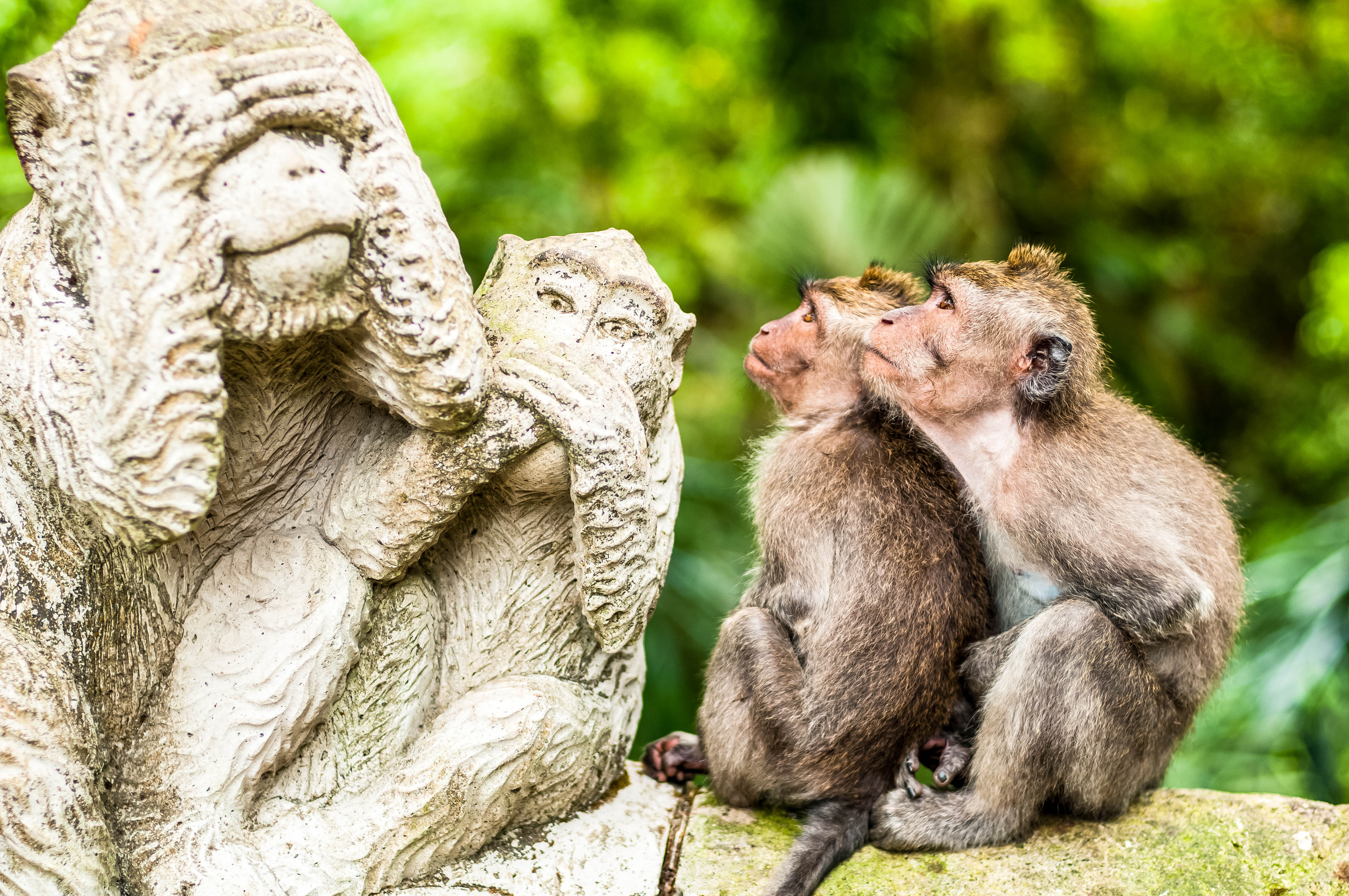 Monkey Forest,