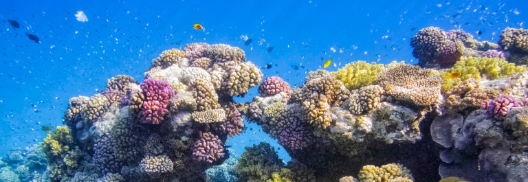 Colorful Coral Reef on Red Sea – Marsa Alam / Egypt