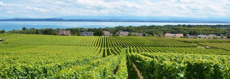 Vineyards-at-Neuchatel-lake_shutterstock_622660859