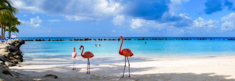 beautiful-Flamingos-on-a-paradise-Beach-iStock_78095489_LARGE-2