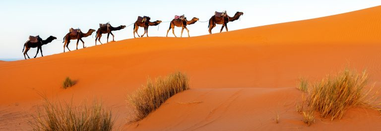 Camels in a series of walk-up, Erg Chebbi, Morocco