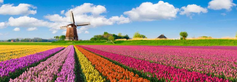 niederlande_windmuehle_tulpen_iS-638591946