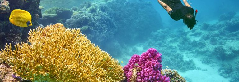 Young-woman-snorkeling-Marsa-Alam-Red-Sea-Egypt-shutterstock_359714744_1920