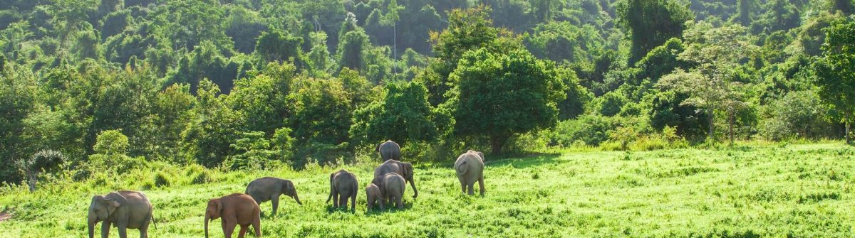 Der Kui Buri Nationalpark in Thailand