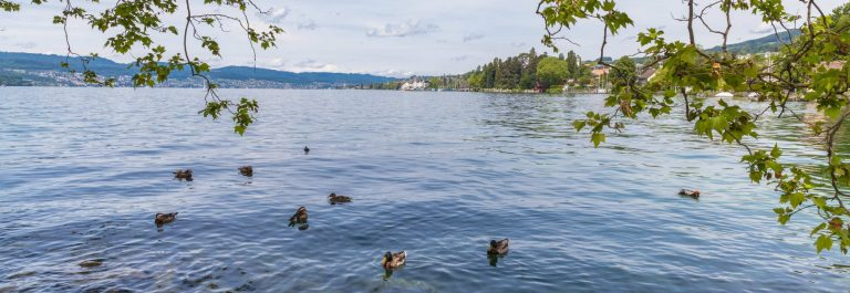 Beautiful-view-of-Zurich-Lake-with-ducks-and-trees-in-foreground_shutterstock_303369194
